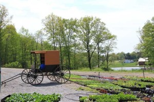 amish-buggy-farm